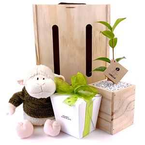 Picture of Our Little Lamb Tree Gift