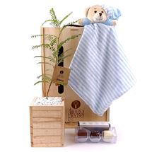 Picture of Bear Cuddly Living Tree Gift