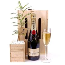 Picture of Living Tree with Moet