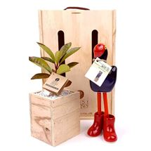 Picture of Living Tree Gift with Pukeko