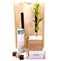 Picture of In Bloom Tree Gift