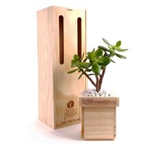 Picture of Jade Plant Gift