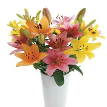 Picture of Asiatic Lilies